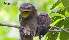 Deretan Jenis Hewan Burung yang memiliki Penampilan Unik & Mempesona